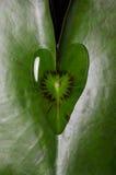 Forma do coração da gota da água Foto de Stock