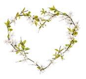 Forma do coração das flores da árvore de cereja isoladas no branco Foto de Stock Royalty Free