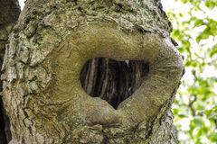 Forma do coração em uma árvore fotografia de stock