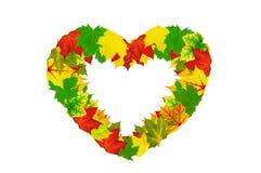 Forma do coração feita pelas folhas de outono de Bordo Imagem de Stock