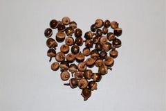 A forma do coração fez das bolotas imagem de stock royalty free