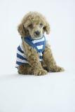Forma do filhote de cachorro foto de stock royalty free