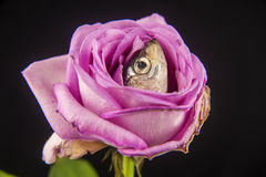 Forma dos peixes de Fishion Imagens de Stock Royalty Free