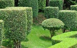 Forma e teste padrão na planta de jardim Fotos de Stock Royalty Free