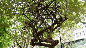 Forma espetacular da árvore fotografia de stock