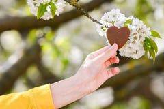 Forma fêmea do coração das mãos no alargamento da luz do sol do bokeh do verde da natureza e no fundo do sumário da folha do borr imagens de stock