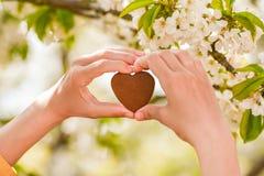 Forma fêmea do coração das mãos no alargamento da luz do sol do bokeh do verde da natureza e no fundo do sumário da folha do borr fotos de stock