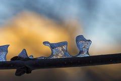 Forma favolosa insolita dei ghiaccioli trasparenti Fotografie Stock
