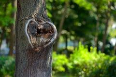 Forma natural del corazón en vieja textura de madera áspera del árbol de la grieta contra Foto de archivo