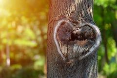 Forma natural del corazón en vieja textura de madera áspera del árbol de la grieta contra Fotografía de archivo