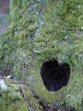 Forma natural do coração encontrada na árvore fotos de stock royalty free