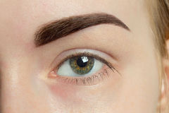 Forma perfecta del ojo significativo expresivo de la ceja Fotografía de archivo