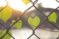 Forma romântica da árvore Fotos de Stock
