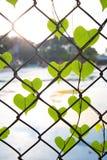 Forma romântica da árvore com as folhas dadas forma coração Imagem de Stock Royalty Free