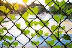 Forma romântica da árvore com as folhas dadas forma coração Fotografia de Stock