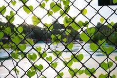Forma romântica da árvore com as folhas dadas forma coração Imagem de Stock