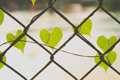 Forma romântica da árvore com o coração dado forma Fotos de Stock Royalty Free