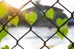Forma romântica da árvore com o coração dado forma Imagem de Stock Royalty Free