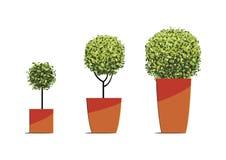 Forma rotonda dell'albero in vasi isolati su fondo bianco Vettore IL Illustrazione Vettoriale