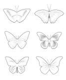Forma stabilita della farfalla Fotografia Stock