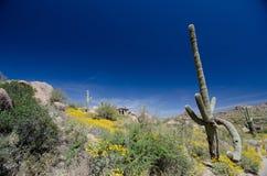 Forma torpe de un Saguaro cerca del rastro del pico del pináculo Imágenes de archivo libres de regalías