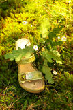 Forma verde da natureza. fotografia de stock royalty free