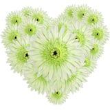 Forma verde do coração dos gerberas Fotografia de Stock