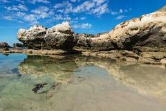Formación de roca con el acantilado con reflexiones en el mar en la playa de Peterborough, Victoria, Australia Fotografía de archivo