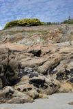 Formación de roca con los mejillones, Bretaña, Francia Foto de archivo libre de regalías