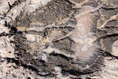 Formación de sal del mar Imagen de archivo libre de regalías