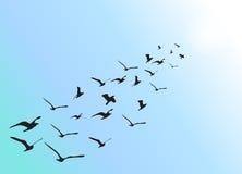 Formación de waterbirds del vuelo Foto de archivo libre de regalías