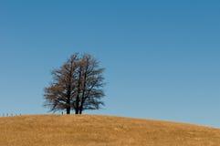 Formación del árbol en una colina del veldt, prado abierto Foto de archivo