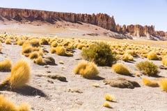Formaciones de la hierba y de roca en reserva nacional de los flamencos del Los Foto de archivo libre de regalías