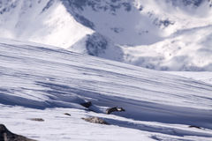 Formaciones de la nieve Fotos de archivo libres de regalías