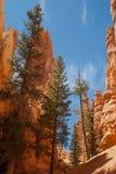 Formaciones de roca de la barranca de Bryce Fotos de archivo libres de regalías