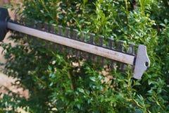 Formacja boxwood krzak Żywopłotu arymaż z elektrycznymi nożycami fotografia stock