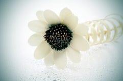 formad blommaprydnad Arkivfoto