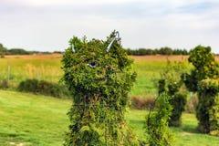 Formad buske för katt huvud arkivfoton