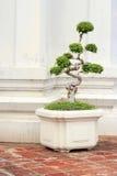 Formad dekorativ tree arkivbild