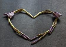 Formad hjärta blommar kransen av Frangipaniblommaknoppar Royaltyfri Foto
