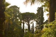 formad tree Arkivfoton