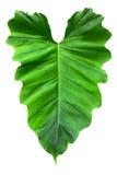 formad white för hjärta leaf Fotografering för Bildbyråer