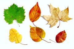 formade kulöra olika leaves Royaltyfria Bilder