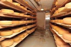 Formaggio del latte di vacca, immagazzinato negli scaffali di legno Fotografia Stock