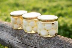 Formaggio di capra organico marinato in olio d'oliva Immagine Stock Libera da Diritti