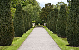 Formal avenue. Of shaped conifer trees leading to decorative gardens stock photo
