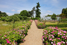 Formal English Garden with Flower strewn Path Royalty Free Stock Image