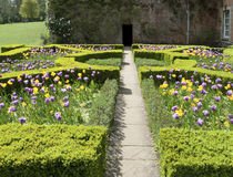 Formal English garden in Spring. English 'parterre' garden design with tulips and hedges Stock Photo