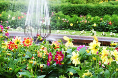 Formal garden. Beautiful formal garden with dalhia flowers and fountain stock photo