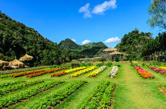 FORMAL GARDEN AND LAWN. FLOWER GARDEN AND LAWN IN DOI ANG-KRANG,CHING-MAI PROVINCE,THAILAND Royalty Free Stock Photo